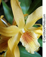 Dendrobium stardust orchid - A close-up image of a beautiful...
