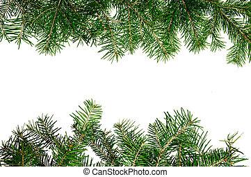 dennenboom, takken, frame