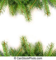 dennenboom, takken, vrijstaand, op wit