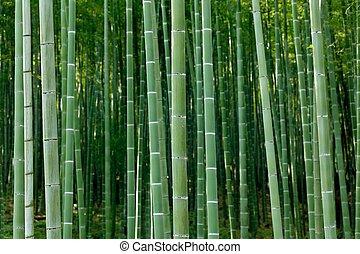 dense bamboo forest - arashiyama bamboo forest, Kyoto, Japan