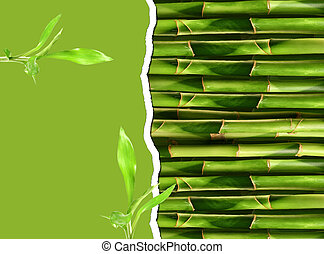 Dense bamboo stalk with copy space