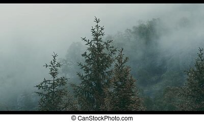 Dense Clouds In Norwegian Forest - Graded and stabilized...
