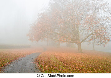 Big Plane tree with fallen leaves in the mist