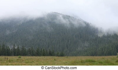Dense fog over mountain meadow and forest - Dense fog over...