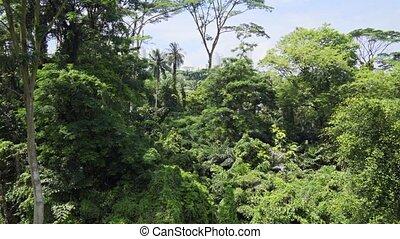 Dense Forest Canopy from Telok Blangah Hill Park's Catwalk -...