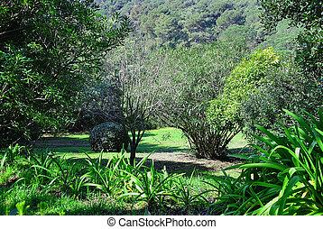 dense forest in spring