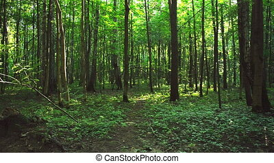 Dense forest in the park - Dense forest in sunny weather in...