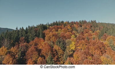 dense forest trees of different colour on pictorial hilltop...