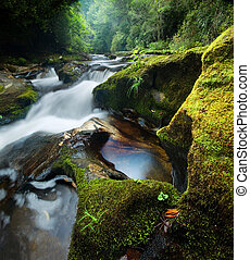 Dense Forest Waterfall - A small intimate waterfall on the...