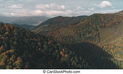 dense forests of green and brown colour cover hills -...