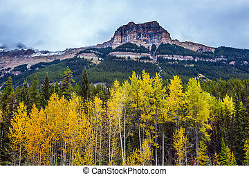 Dense forests - The Rocky Mountains. Dense coniferous and...