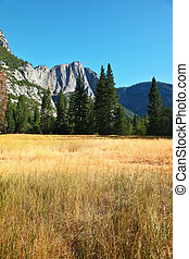 Dense grass in national park in California.