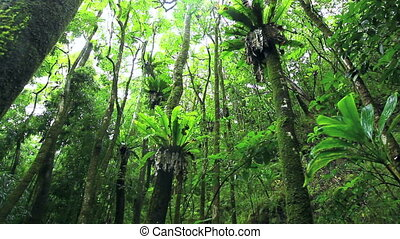 Dense green forest - A dense evergreen forest with tall...