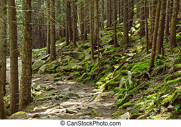Dense green forest - A dense mistic green forest with mossy...