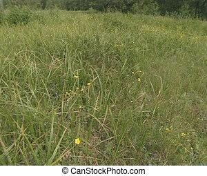Dense meadow full of high grass, in