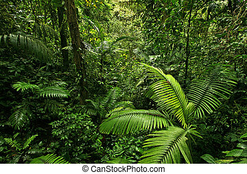 Dense Rain Forest Jungle - A picture looking into a dense,...