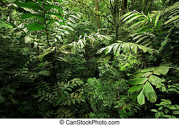 Dense Rain Forest Jungle