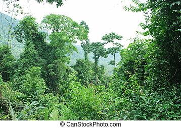 Dense rain-forest