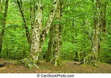 Dense Rainforest - In the depths of rainforest natural...