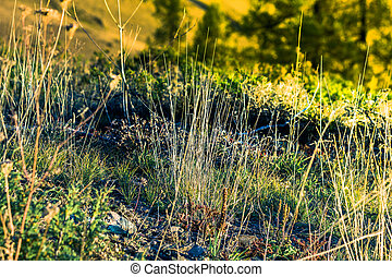 Dense thickets of grass on a summer day