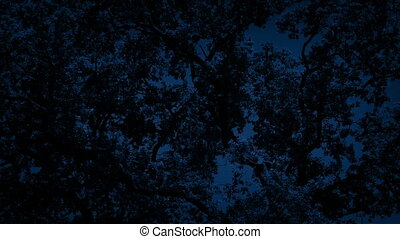 Dense Tree Branches At Night - Tree branches in the dark
