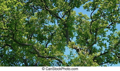 Dense Tree Branches On Sunny Day - Dense mass of tree...