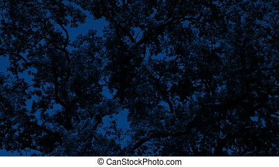 Dense Tree Canopy At Night - Dense tree branches with leaves...