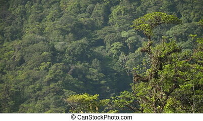 Dense Tropical Rainforest Jungle, Costa Rica - Medium high-...