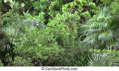 Dense tropical vegetation in Caribbean island.