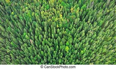 dense, ukraine, perspective, forêt, aérien