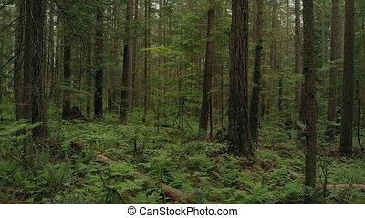 dense, voler, pays boisé, arbres, par, fougères