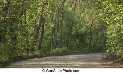 Dense Wood Gravel Road - Dense wood gravel road.