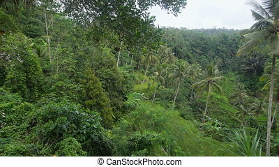 Densely overgrown green jungle. Lots of tall palm trees in a...