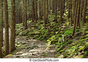 denso, bosque verde