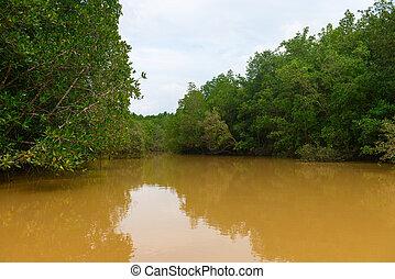 denso, fangoso, asia, folliage, agua, pantano
