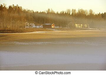 denso, nebbia, sopra, uno, campo, in, inverno