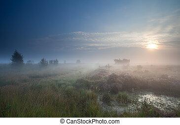 denso, nevoeiro, sobre, pântano, em, amanhecer