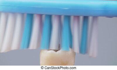 dent, nettoyage, brosse dents, tir, 4k