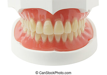 dentadura, trayectoria, recorte, fondo blanco
