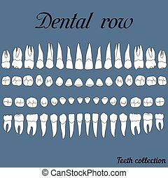 dentaire, rang, dents