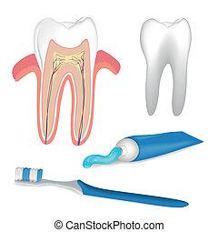 Dental Care Elements