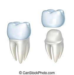 dental, diente, aislado, Coronas