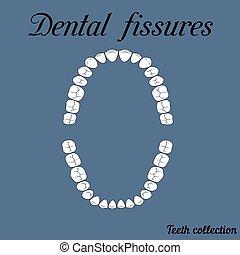 Dental fissures