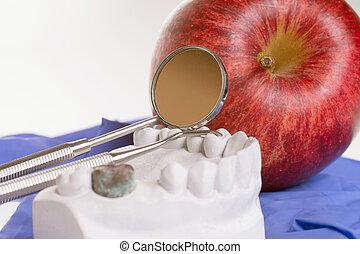 dental hygiene - Apple and model of a human teeth