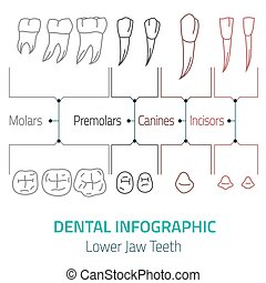 Dental infographic vector
