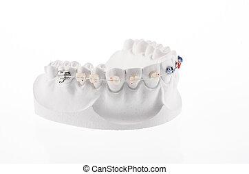 Dental lower jaw