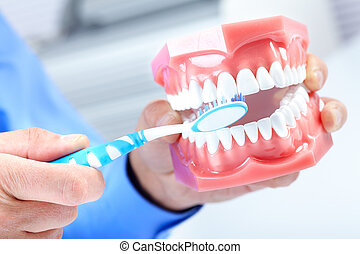 Dental model and teethbrush