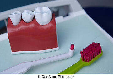 Dental model and toothbrushes. Concept image of dental background. Dental hygiene background