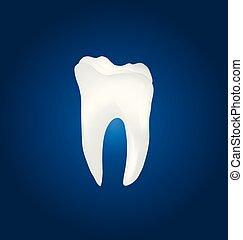 Dental molar tooth vector