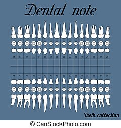 Dental note for dental clinic - Dental note upper and lower...